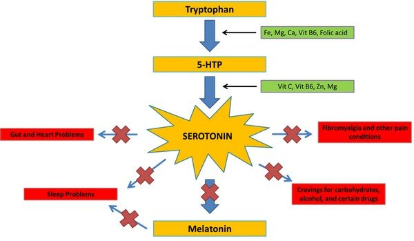 diagram of the tryptophan-serotonin synthesis pathway