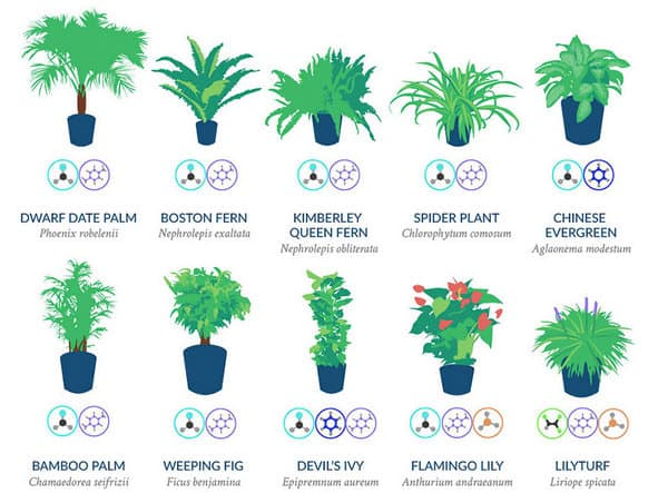 plants that remove neurotoxins