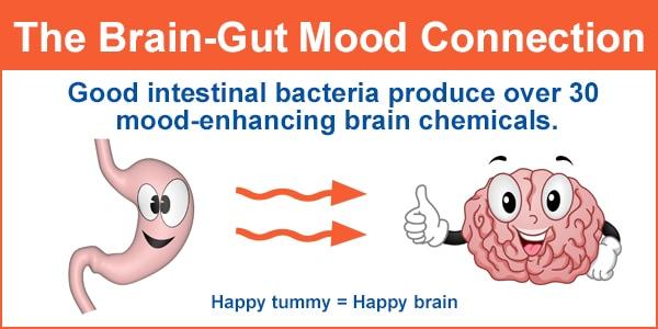 good gut bacteria produce brain chemicals