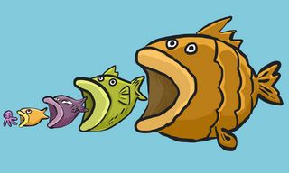 food chain that makes fish a good source of DHA