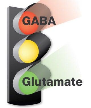 illustration of a gaba-glutamate stop light signal