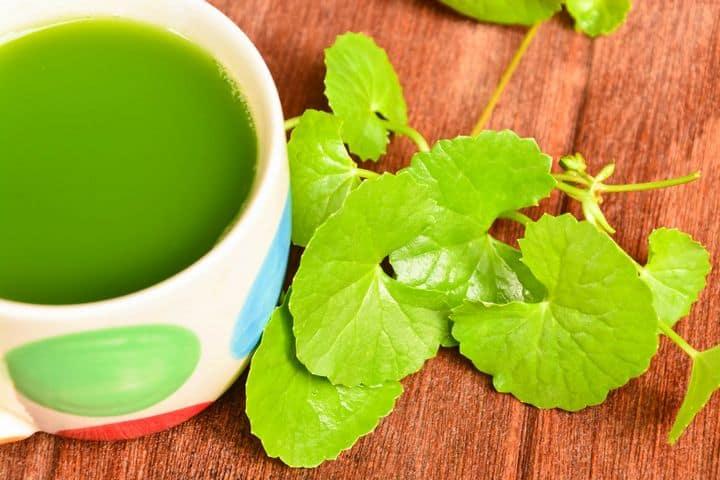 gotu kola plant and tea