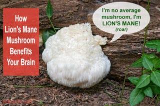 photo of lion's mane mushroom
