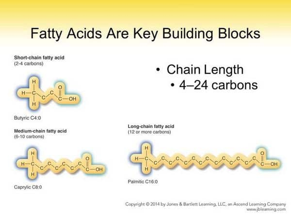short, medium, and long-chain fatty acids compared