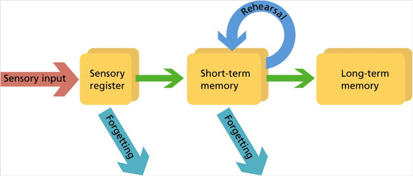 chart depicting how memories are stored