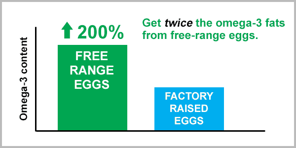 omega-3 content of eggs