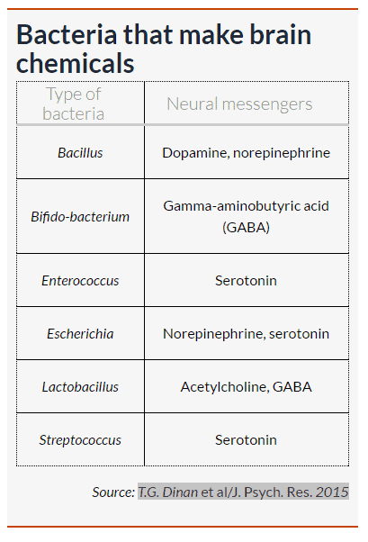 bacteria neurotransmitter synthesis chart