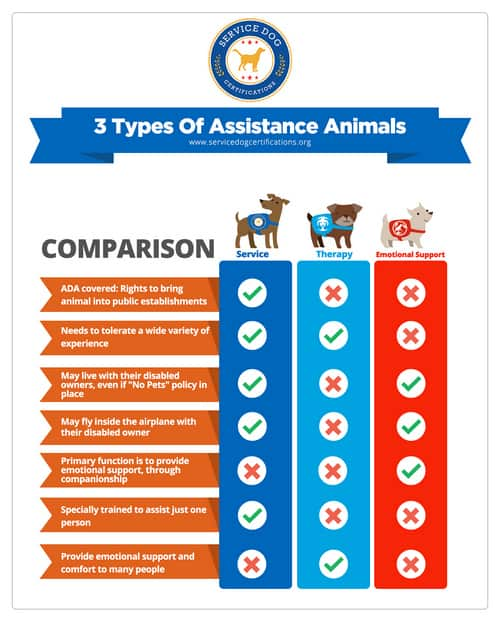chart comparing three main types of assistance animals